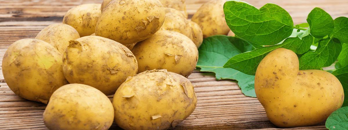 Bio Kartoffeln Laberweinting Labertal Biohof Dallmeier