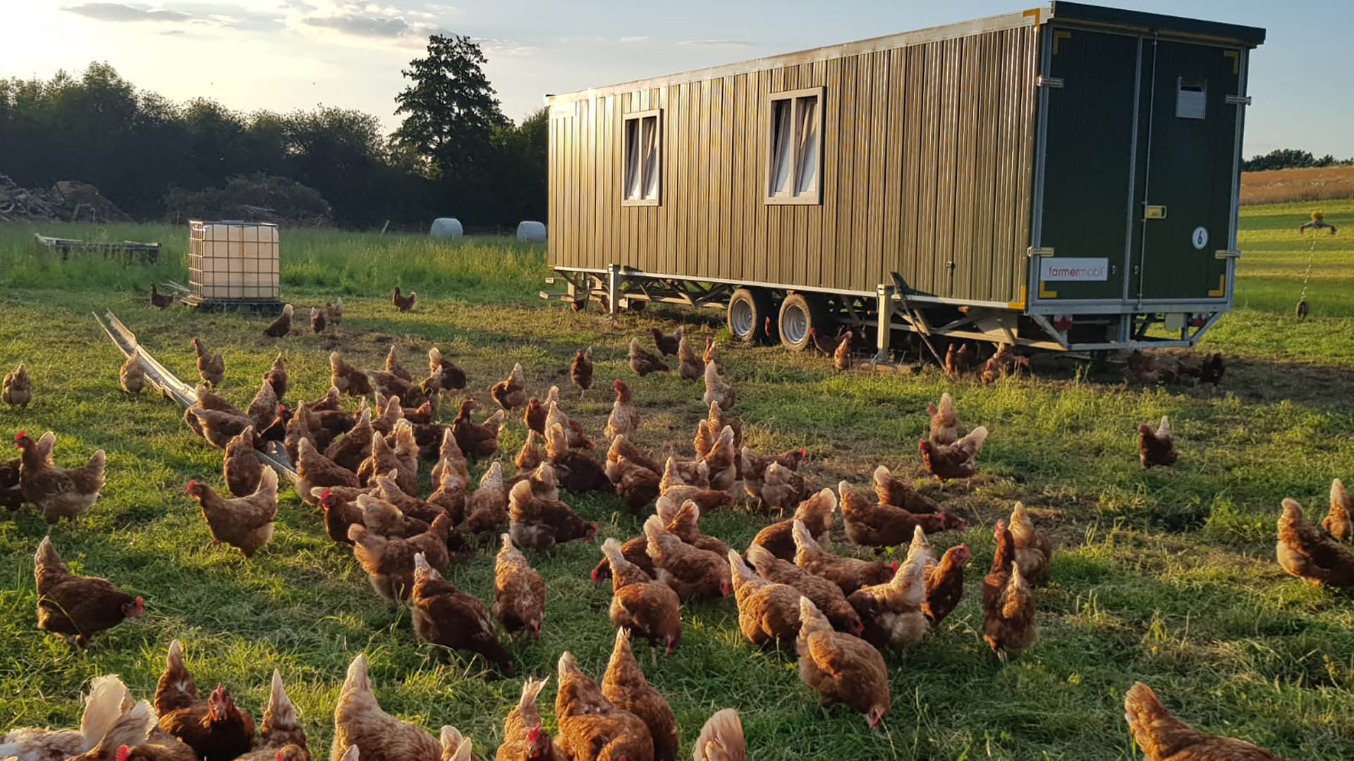 Mobiler Hühnertall - Biohof Dallmeier Laberweinting